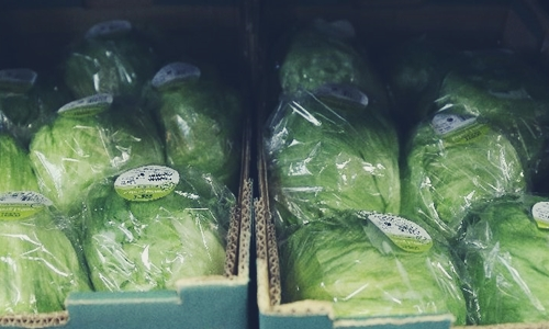 singapores ava malaysian lettuce supermarkets